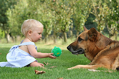 dog and baby safety