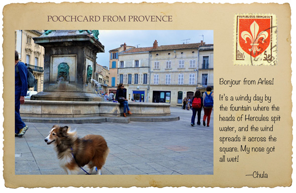 pet travel to France