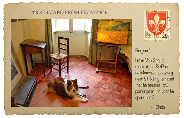 pet travel in France